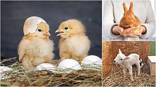 Kam na výlet: Velikonoce se zvířátky