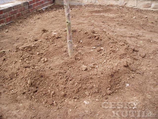 Výsadba stromu