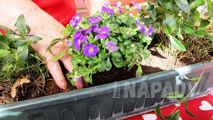 Jak si udělat svěží květinový truhlík aneb jaro je tady  6
