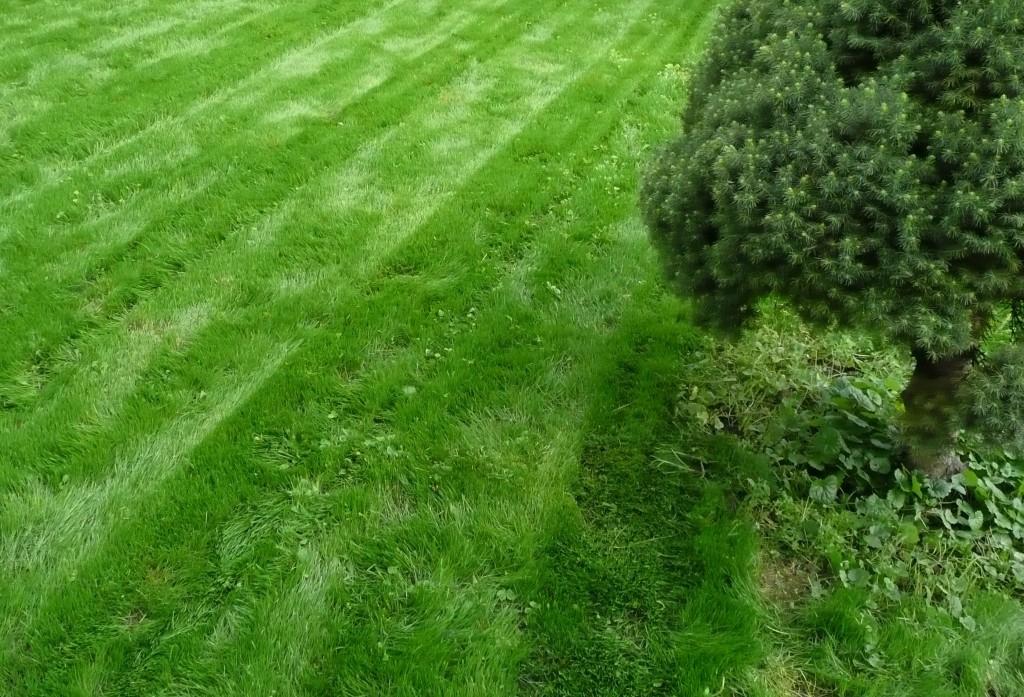 Jak jednoduše odstranit travní plsť z trávníku a bez vertikutace
