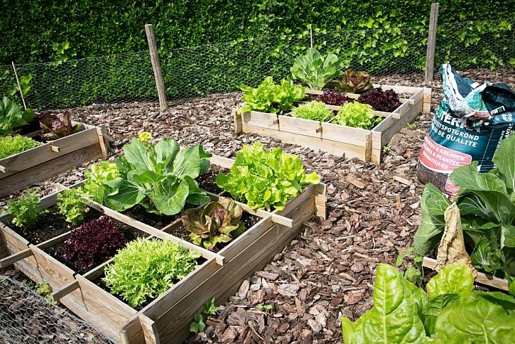 Dřevo v zeleninové zahradě je krásné i účelné