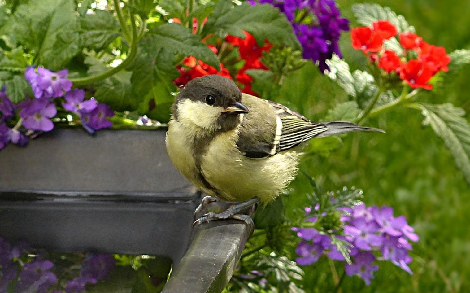 Napajedla a koupadla pro ptáky: Nedostatek vody trápí ptactvo nejen vobdobí sucha