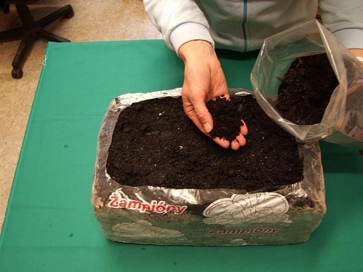 Na povrch substrátu pak rozložte asi 2 cm vysokou vrstvu krycí zeminy ze sáčku, který je součástí dodávky
