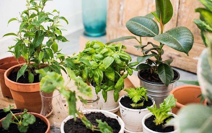 TOP 12 doma pěstovaných tropických rostlin