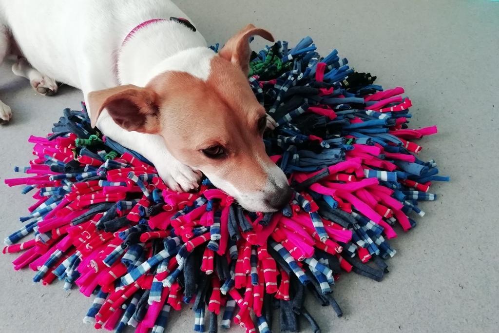 Čichací kobereček pro šikovné psy