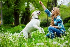 Váš pes a koronavirová opatření