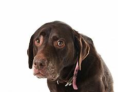 Co všechno by měl chovatel vědět, než si pořídí psa z útulku