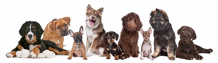 Pokud máte zvládat svého psa, naučte ho základním povelům (Zdroj: Depositphotos)