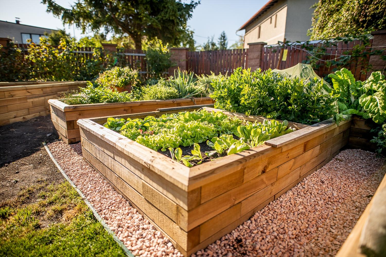 Pěstování na vyvýšených záhonech má mnoho výhod