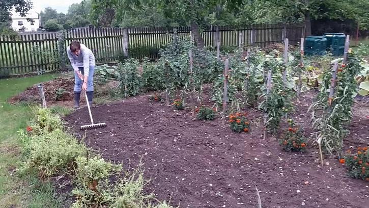 Výsadba zeleného hnojení
