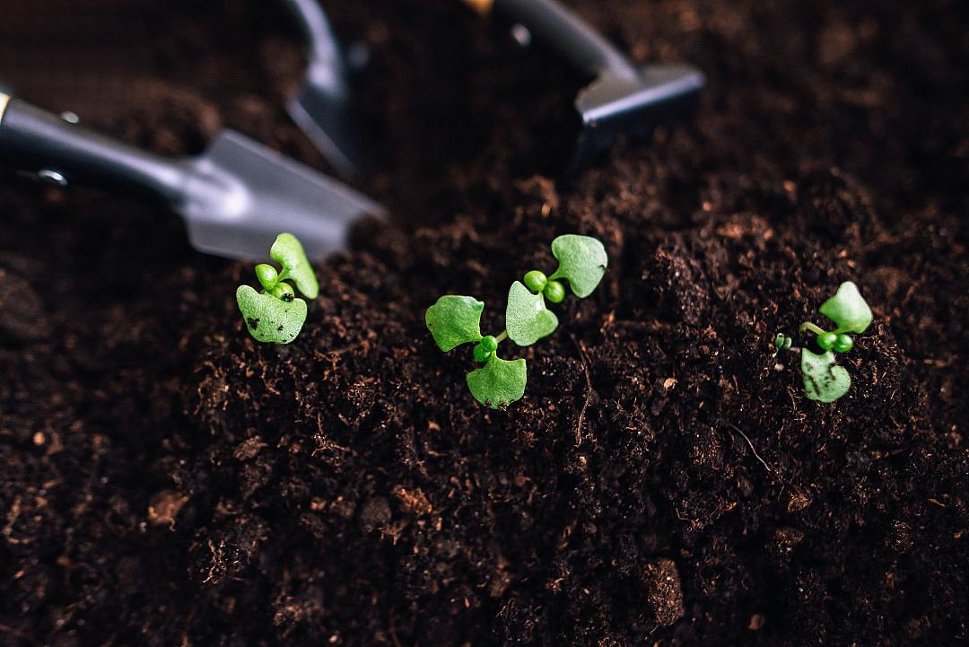 obrázek tématu: Příprava zahrady na novou sezónu