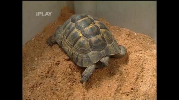 Chov suchozemských želv