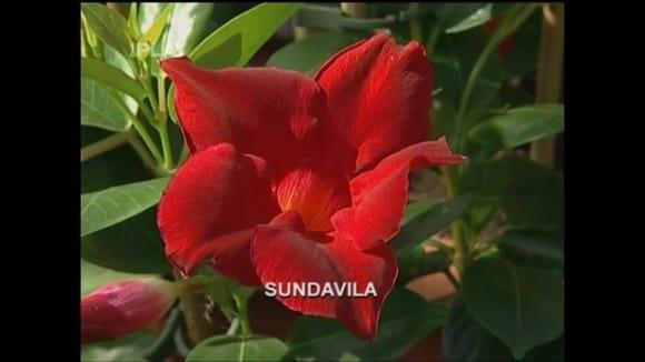 Novinky a zajímavosti v oblasti balkonových rostlin