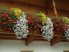 Jak bychom měli pečovat o květiny na balkoně během léta?