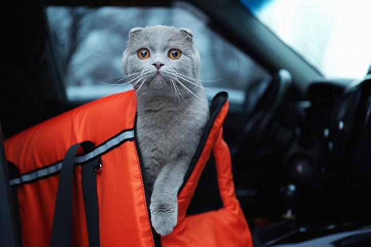 Přepravní taška pro kočku