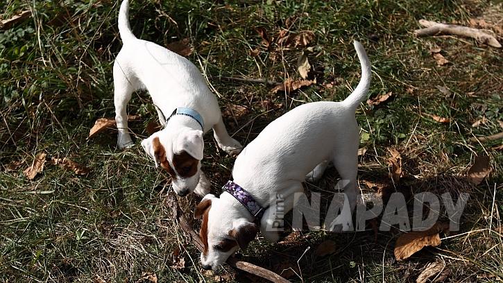 Základem proti psí depresi je jít se psem na dlouhou procházku, vzít ho mezi psí kamarády