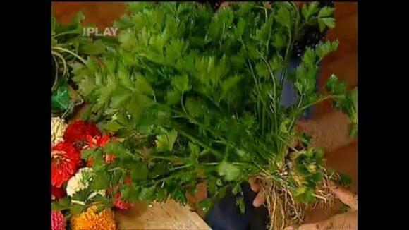Nové odrůdy celerů