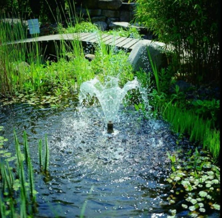 Zahradní jezírka a vodní plochy