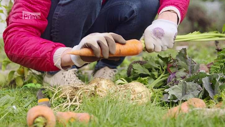 Zelenina na uskladnění