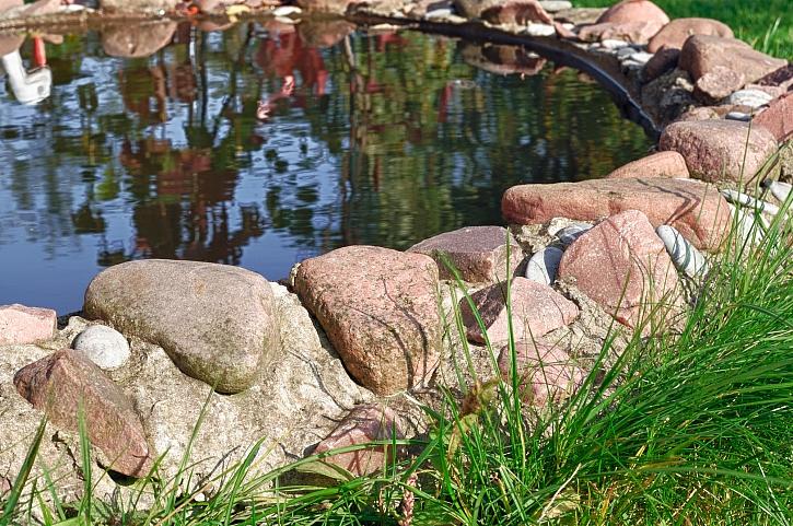 Co dělat se zahradním jezírkem na jaře? (Zdroj: Depositphotos)