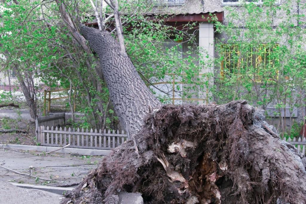 Profesionální kácení stromů nám může zachránit život