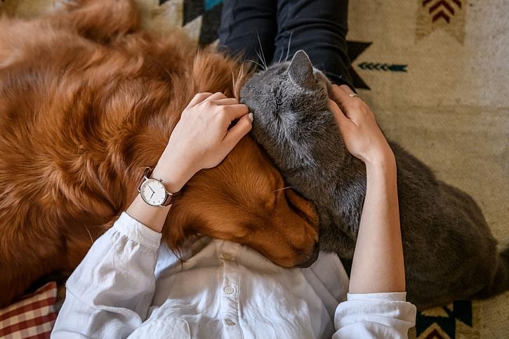 Zdraví domácích zvířat a roční období
