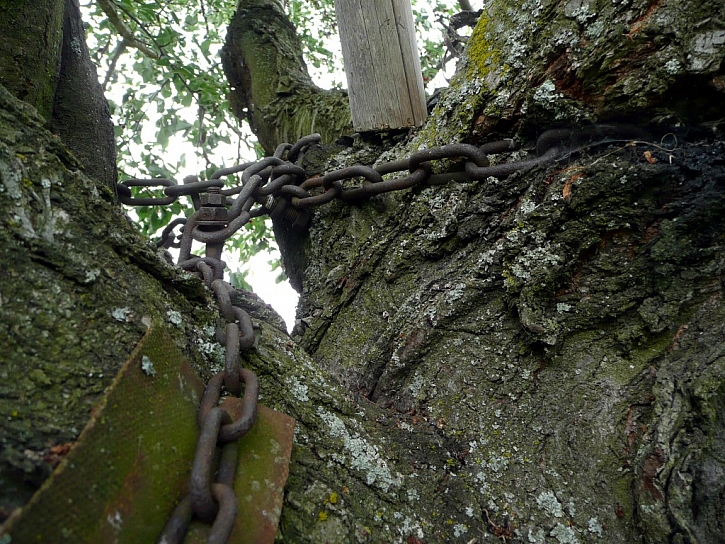 Antikutil – slzy zničených stromů