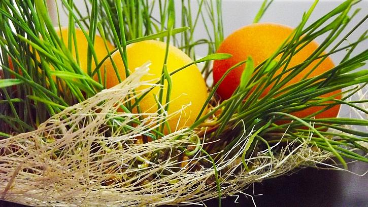 Připravte se na Velikonoce, vysejte si jarní osení (Zdroj: Depositphotos)
