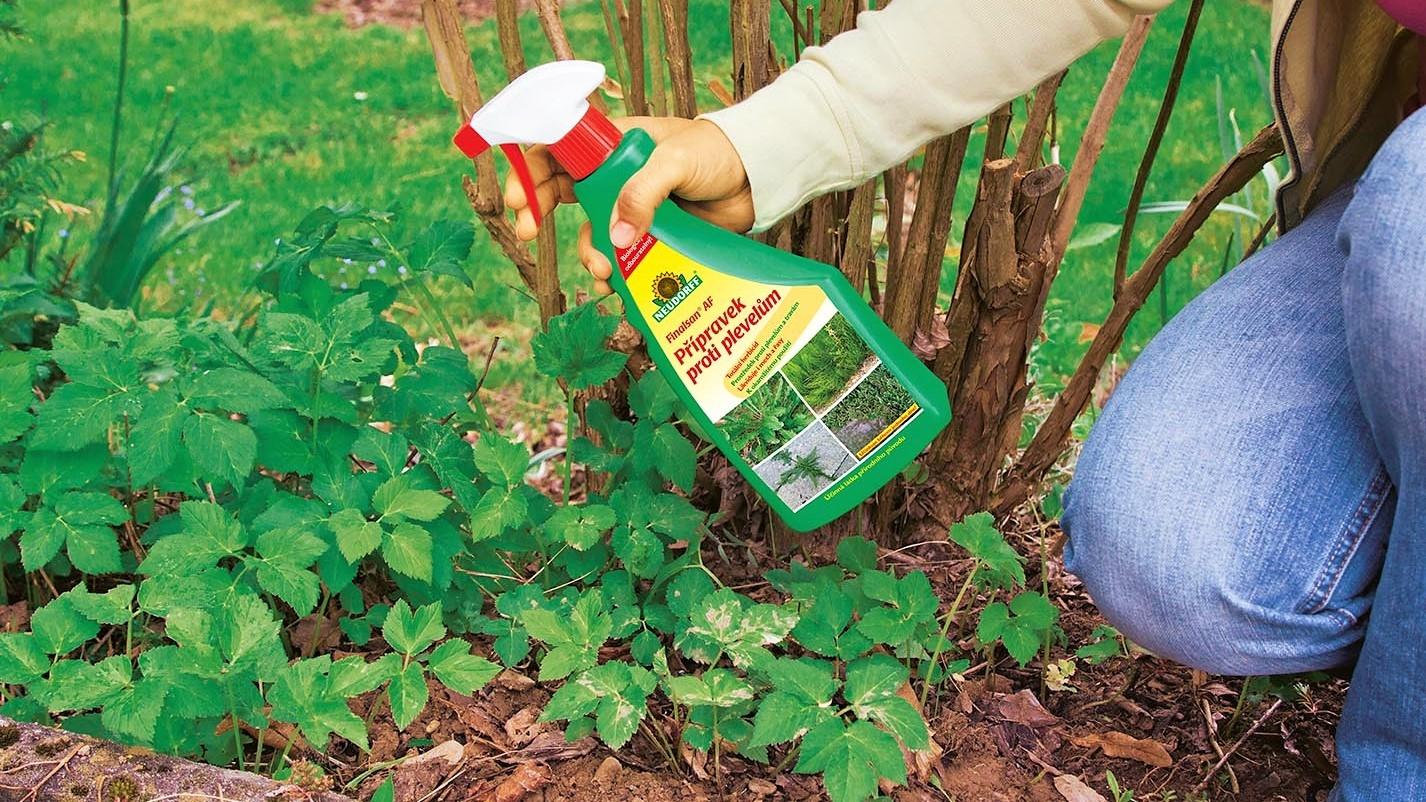 Co se zelená a bují na jaře nejvíc? Plevel!