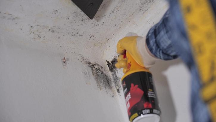 Jak odstranit plísně na stěnách