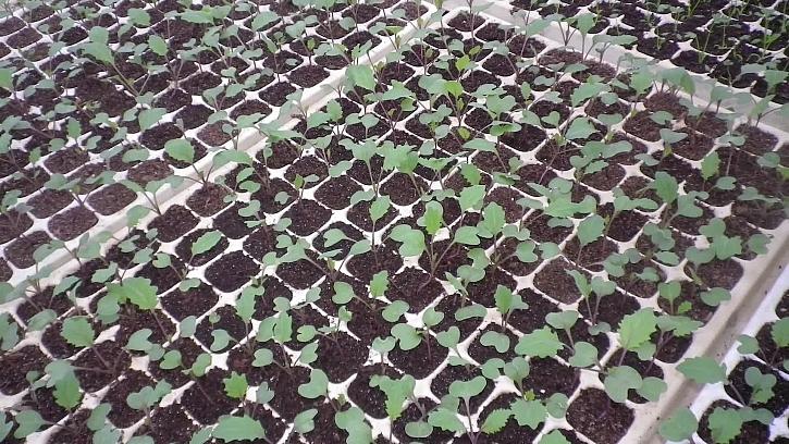 Jak na raný výsev zeleniny