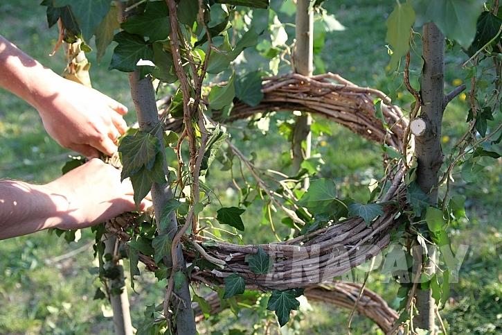 Výroba opory pro popínavé rostliny z větví