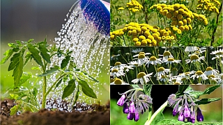 Přírodní zahrada: Dopřejte svým rostlinám domácí výživu a ochranu z bylin