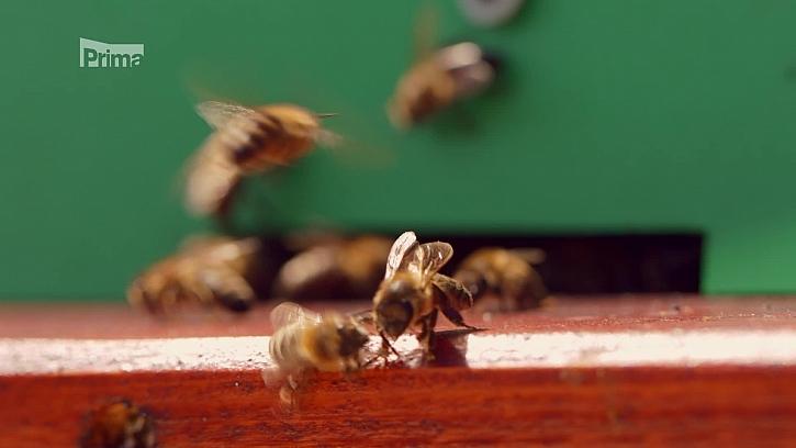 Zkuste si zařídit včelí úly na střeše vašeho domu