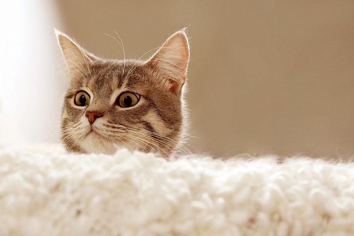 Kočičí nachlazení  je potřeba řešit a brzy léčit (Zdroj: Depositphotos)