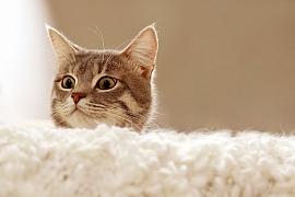 Jak léčit kočičí nachlazení a jak mu předcházet