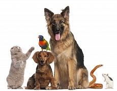 Fobie ze zvířat - zoofobie nám dokáže znepříjemňovat život