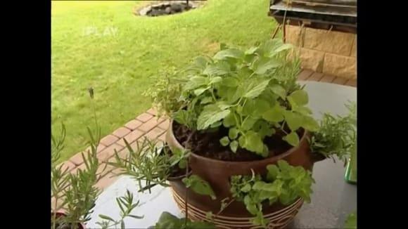 Hnojení bylinek a hubení mšic