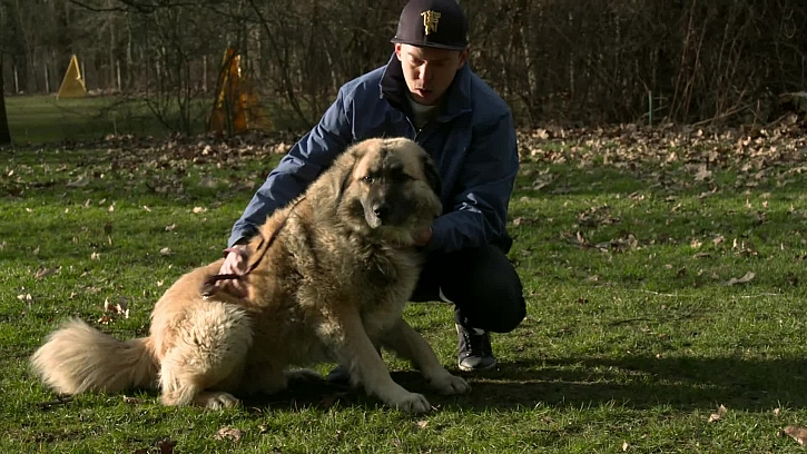 Pes a člověk