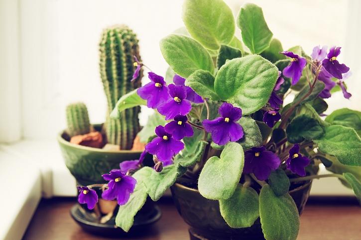 Trendy pokojových rostlin (Zdroj: Depositphotos)