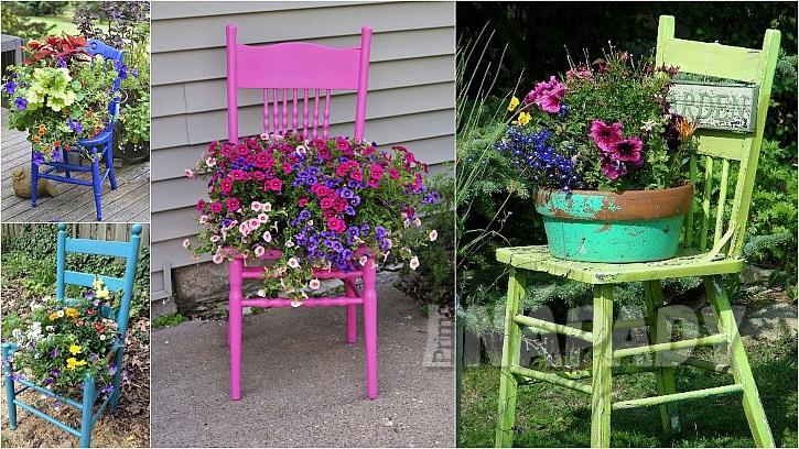 Barevná zahrada: usazené květiny