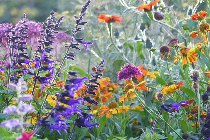 Víte, jak na rozkvetlou zahradu v říjnu? (Zdroj: Zahradnictví Flos Praha)