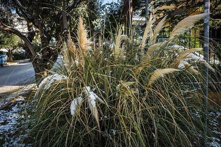 Traviny v zimě