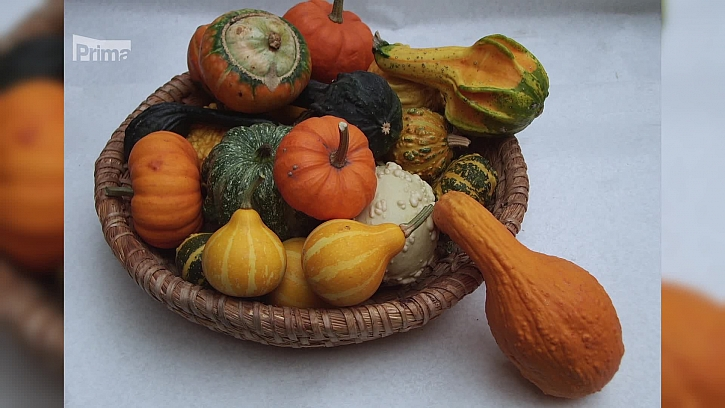 Předpěstování tykvovité zeleniny