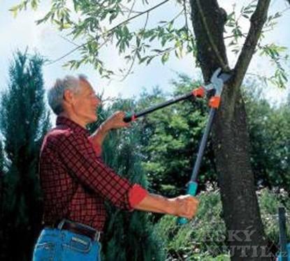 Stříháme ovocné stromky