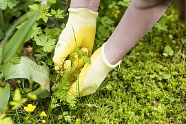 Úporné plevele na zahradě mohou hodně znepříjemnit život