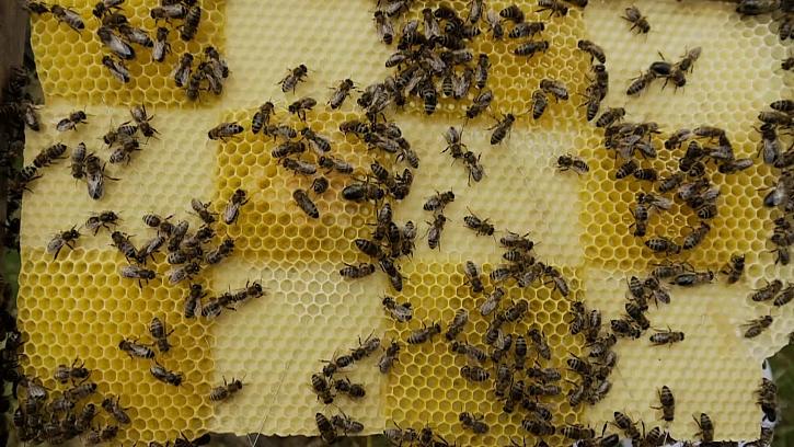 Včelí kontrola