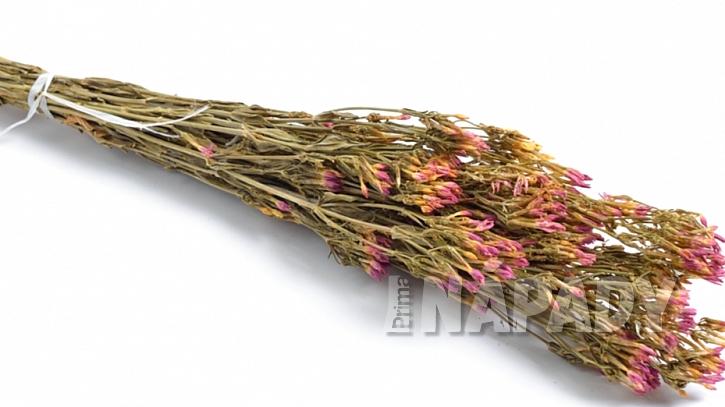Zeměžluč okolíkatá (Centaurium erythraea): správně usušená bylina má zelenou barvu a růžové květy, je bez pachu se silně hořkou chutí