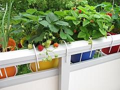 Zelenina za okno a rychlení cibulovin nahradí pěstování na záhonu