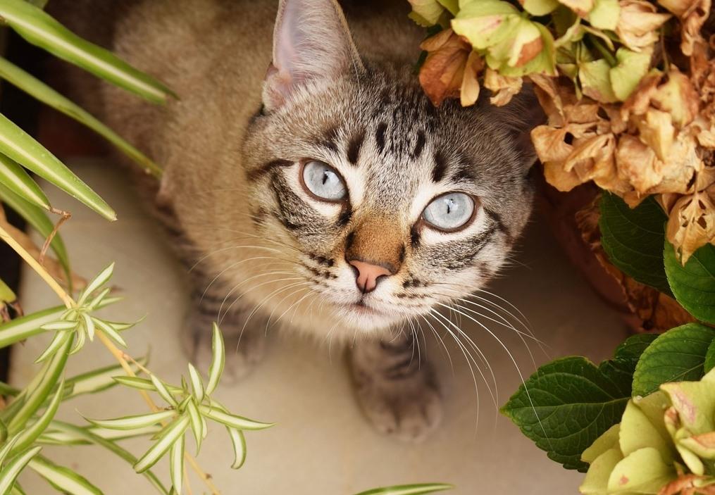 Některé kočky květiny milují až příliš… ale pozor, mohou se jim stát osudnými